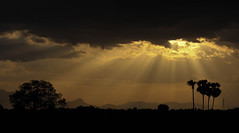 Blessing from heaven (viveksanand) Tags: evening trees yellow dark landscape sunlight sun rays sunrays