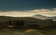 Tuscany (1 of 1) (selvagedavid38) Tags: trees cypress cypressi tuscany landscape dawn light sunrise italy