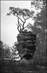 da thront er (jo.sa.) Tags: dahner felsenland südwestpfalz analog analogefotografie schwarzweiss schwarzweissfotografie sw bw felsen sandstein lebensraum stillleben