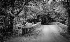 Abbey Lane . (wayman2011) Tags: 7artisans35mmf12lightroom5 colinhart fujifilmxe2s wayman2011 bwlandscapes mono rural lanes trees bridges pennines teesdale barnardcastle countydurham uk