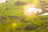 _Y2U4479-81.0919.Bản Dọi.Tân Lập.Mộc Châu.Sơn La (hoanglongphoto) Tags: asia asian vietnam northvietnam northernvietnam northwestvietnam landscape scenery vietnamlandscape vietnamscenery mocchaulandscape terraces terracedfields morning sunny sunlight sunshine sunnymorning hillside hdr canon canoneos1dx canonef70200mmf28lisiiusm tâybắc sơnla mộcchâu tânlập bảndọi ruộngbậcthangmộcchâu nắng buổisáng nắngsớm sườnđồi