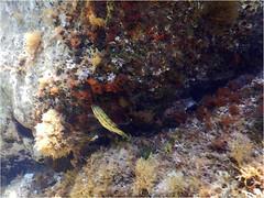 Plongee Porto Pollo DSCN1342 eff aquarelle (michele.muno) Tags: corse corsica portopollo plongée mer sea underwater