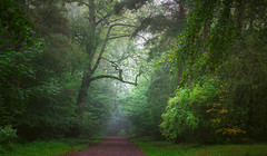 Autumn park (Dhina A) Tags: sony a7rii ilce7rm2 a7r2 a7r fe 24105mm f4 sonyfe24105mmf4 zoom lens bokeh sharp sel24105g