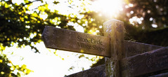 Country sign at Avebury, Wiltshire, UK (Blue Rock Fox) Tags: avebury wiltshire wood sign sunlight backlit intothesun intothelight spidersweb stonecircle history outside outdoors trees rural country old ancient art signpost canon5diii