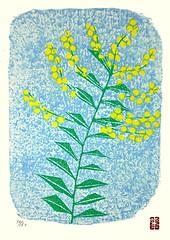 Acacia (Japanese Flower and Bird Art) Tags: flower acacia fabaceae yasuo kazuki modern woodblock print japan japanese art readercollection