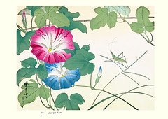 Japanese morning glory and wire grass (Japanese Flower and Bird Art) Tags: flower morning glory ipomoea nil convolvulaceae wire grass eleusine indica poaceae zuigetsu ikeda nihonga woodblock print japan japanese art readercollection