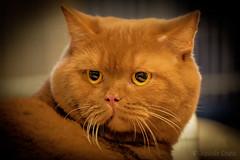 Gatti 5 / Cats 5 (Eugenio GV Costa) Tags: approvato cats gatti cat gatto animal animale domestico
