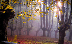 URDIÑA (juan luis olaeta) Tags: landscape tree fog forest photoshop raw fujifilm basquecountry lightroom xt3 laiñoa