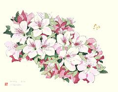 Azalea (Japanese Flower and Bird Art) Tags: flower azalea rhododendron ericaceae shin'ichiro modern woodblock print japan japanese art readercollection