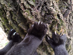 """Paws with Claws - Happy Caturday """"Paws"""" Theme (annette.allor) Tags: cat happycaturday trees climbing paws claws"""