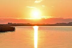 Sunrise - Sonnenaufgang (Susanne Weber) Tags: sunrise sonnenaufgang natur yellow orange morning germany northsea