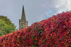 Firewall (scottprice16) Tags: plant virginiacreeper england lancashire clitheroe wall hedge creeper colour red fire local view town church stmaryschurch spire morning october 2019 autumn leaves sky cloud sony sonyrx100m3 outdoors seasons seasonal change fall ribblevalley