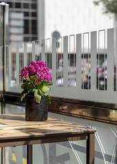 Table with Flowers. Restauarant Bilbao (Alex Kozyr) Tags: bilbao flowers restaurant travel spain streetphotography