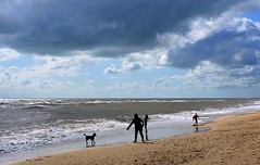 Playing on the beach at Southwold, Suffolk (Snapshooter46) Tags: suffolk playing beach southwold northsea sand dog