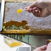 Healthy and natural: tasting the honeycomb directly