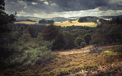 An Eifel Landscape (Netsrak) Tags: baum bergheidenweg eu eifel europa europe forst heide landschaft natur wald heather landscape nature tree trees