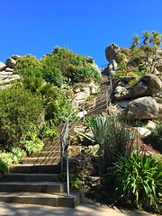Stairway to Heaven (Julie (thanks for 9 million views)) Tags: steps fence brittany roscoff exoticgarden plants foliage france holiday green stairs hff hsfs jardinexotiquederosscoff iphone6s hmmm