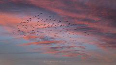 The beautiful trip (Bertrand Thiéfaine) Tags: vol oiseaux ciel nuages voyage rêve leverdujour
