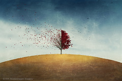 loss (Dyrk.Wyst) Tags: atmosphere autumn clouds field landscape ländlich minimalism rural sky illustration tree redfoliage flockofbirds lonetree conceptual painterly collage textures simplicity wind hill photoshelter trevillion