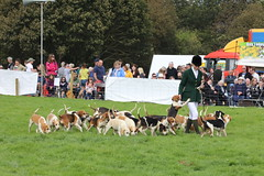 698A4923 (Penistone Show 2019) Tags: hounds