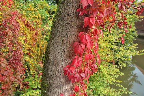 Herbst in Düsseldorf Kalkum