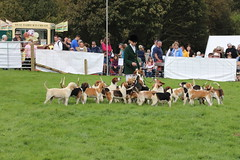 698A4921 (Penistone Show 2019) Tags: hounds
