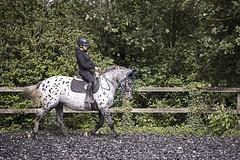 Trot on.... (Taken By Me Photography) Tags: nikon north lancashire lancs myerscough radar eve horse rider ride takenbyme takenbymephotography wwwtakenbymephotographycouk pony canter trot gallop arena field d750 myerscoughequinearena