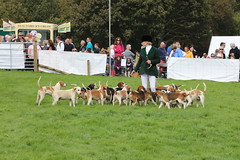 698A4922 (Penistone Show 2019) Tags: hounds