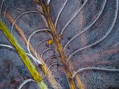 Icetime again : ) (Fjällkantsbon) Tags: lappland blaikfjälletsnaturreservat höst evamårtensson långmyrkullen sverige högland västerbottenslän ice abstract patterns platser årstider