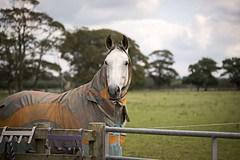Coated.... (Taken By Me Photography) Tags: nikon north lancashire lancs myerscough radar eve horse rider ride takenbyme takenbymephotography wwwtakenbymephotographycouk pony canter trot gallop arena field d750 myerscoughequinearena