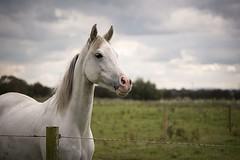 Forward thinking.... (Taken By Me Photography) Tags: nikon north lancashire lancs myerscough radar eve horse rider ride takenbyme takenbymephotography wwwtakenbymephotographycouk pony canter trot gallop arena field d750 myerscoughequinearena