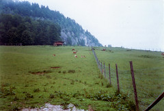 Strobl - Kleefeld (Volker Zürn) Tags: baum europa garten pflanze strobl weide welt wild wolfgangsee zaun österreich salzburg
