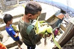 _O2A0170 (JauaMiranda) Tags: cosecha maíz caracas venezuela chávez siembra