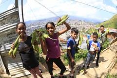 _O2A0147 (JauaMiranda) Tags: cosecha maíz caracas venezuela chávez siembra