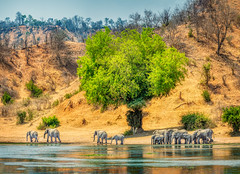 Africa Pano (Trey Ratcliff) Tags: africa chilogorgelodge stuckincustomscom treyratcliff zimbabwe elephants animals water tree hole watering family memory herd green