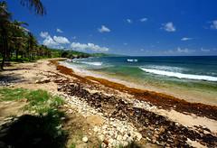 Beautiful beach in Barbados (` Toshio ') Tags: toshio barbados bathsheba bathshebabeach beach sand atlanticocean caribbean wave coast coastline ocean sea