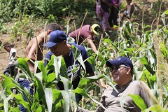 _O2A9998 (JauaMiranda) Tags: siembra chávez maíz caracas cosecha