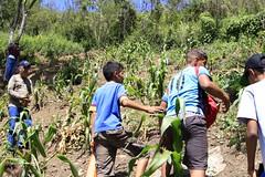 _O2A9913 (JauaMiranda) Tags: siembra chávez maíz caracas cosecha