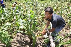 _O2A9891 (JauaMiranda) Tags: siembra chávez maíz caracas cosecha