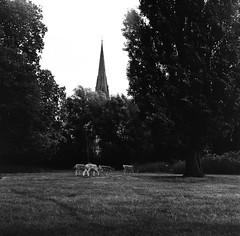 000116670007 (Edwin Be) Tags: clissold park london lubitel jch japan camera hunter blackandwhite film analog 120