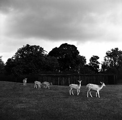 000116670006 (Edwin Be) Tags: clissold park london lubitel jch japan camera hunter blackandwhite film analog 120