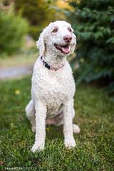 Sweet Rosie (Samantha Decker) Tags: canoneos5dmarkiv dog canonef50mmf14usm samanthadecker