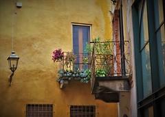 Casale Monferrato (ornella sartore) Tags: casale monferrato balcone lampione finestre piante fiori colori particolari