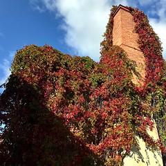 Creeper Turning Autumn Red🍁 (halleluja2014) Tags: skorsten chimney blueskies september autumn nybrogatan falun virginiacreeper creeper vildvin quinquefolia parthenocissus