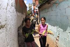 _O2A0176 (JauaMiranda) Tags: cosecha maíz caracas venezuela chávez siembra