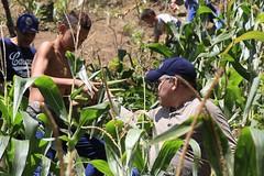 _O2A9995 (JauaMiranda) Tags: siembra chávez maíz caracas cosecha