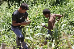 _O2A9956 (JauaMiranda) Tags: siembra chávez maíz caracas cosecha