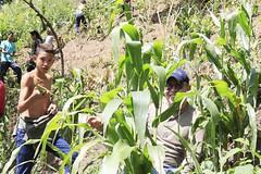 _O2A9941 (JauaMiranda) Tags: siembra chávez maíz caracas cosecha