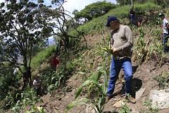 _O2A9922 (JauaMiranda) Tags: siembra chávez maíz caracas cosecha