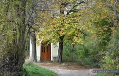 Niederösterreich Weinviertel Enzersfeld_DSC1306 (reinhard_srb) Tags: niederösterreich weinviertel enzersfeld lourdes kapelle wald weg andacht glaube religion herbst